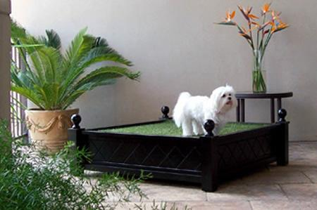 Indoor Lawn for Puppy